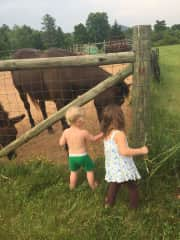 Giving a little extra love to a horse and donkey we cared for in VA