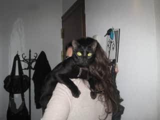 Gisela cat sitting for her sister.
