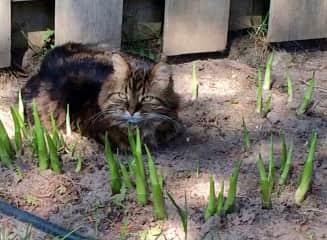 Char's cat, Dr. Bombay, gardening.