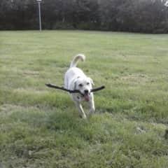 Isabella loves retrieving