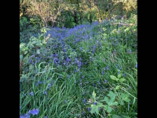 Path down to the stream through the bluebell woods - a treat if you sit for us in May
