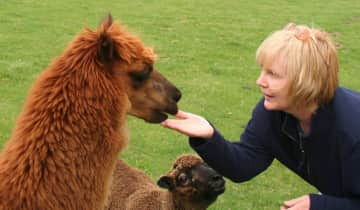 Colleen enjoying a pasture of llamas and alpacas. Our llamas protected our miniature horses.