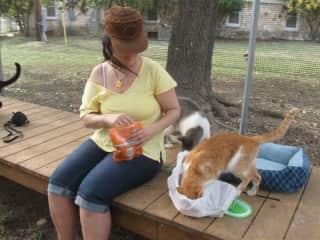 Volunteering in an animal sanctuary in Austin, Texas.