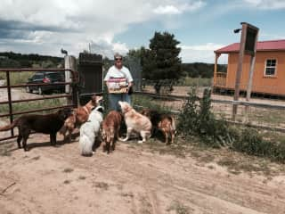 Linda with friends in their forever home at Sunflower Sanctuary