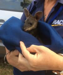 Rescuing the local wildlife :))