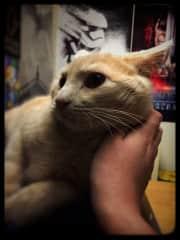 My cat Pazuzu