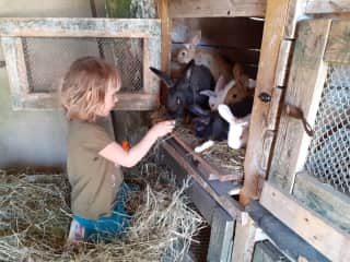 Sara (4y) loves take care of animals and her favorite chore is feeding rabbits.