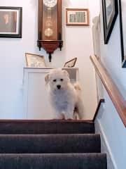 Harry, part Tibetan terrier, part who knows?