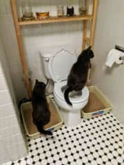 That's our own Oscar showing off by peeing on the toilet. Arthur is using the litterbox at the same time