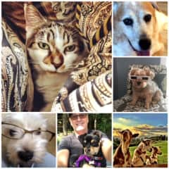 My adopted  cat in upper left corner and the other photos are of past sits under my care.