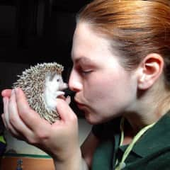 with Tiggywinkle, the African pygmy hedgehog at Vauxhall City Farm