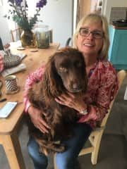 Willie and Julie - our New Forest sit