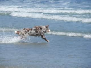 Playing at the beach is fun!