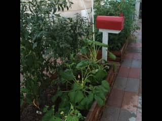 My little garden in the desert. Closed down now for the summer.
