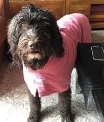 Roxy in London after a walk in the rain