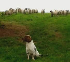 Behind you!! Inquisitive sheep.