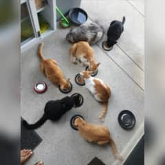 7 out of the 10 cats we looked after in Thailand! Kitty Heaven!