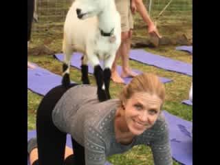 Goat yoga in Keokea, Maui