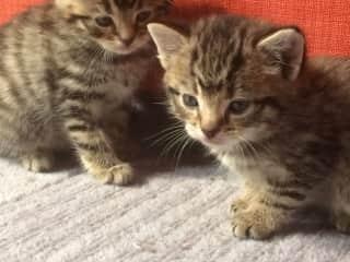 Roxy's kittens!!