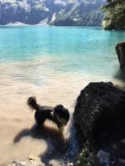 This is Ivo, my Australian shepherd, after a swim near home in Switzerland.