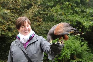 Falconry in Ireland