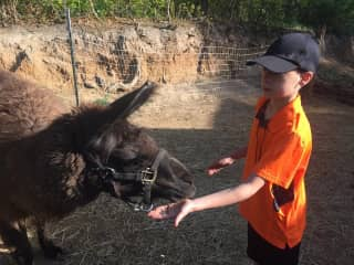 Isaiah feeding the Lama
