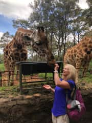 Making friends with giraffes in Nairobi recently