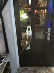 He can open most doors!