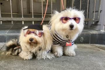 Dogs chilling out at the Fillmore Jazz Festival (2017)
