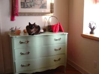 My last cat Sophia, in my own home