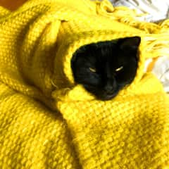 I mean come on. Our cat Gala loves to snuggle in anything we leave behind. Don´t disturb my comfort human!