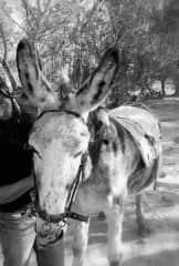 Conchi with the sweet donkey