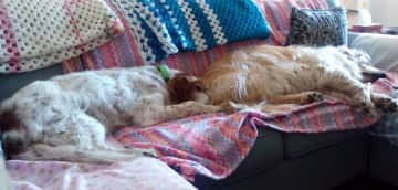 Marlo (almost 16) and Shiloh, 8, snoozing on the couch