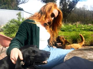 The farm dogs we cared for took an instant liking to Kat.