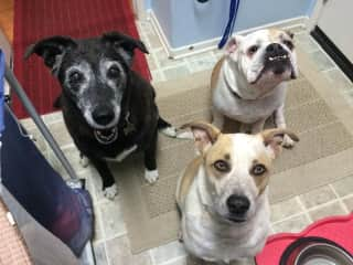 Lucy, Bumbles and foster Hoda in the old days