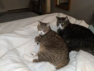 Ivy and Bert. I love you. They have passed on to kitty heaven. I miss them.