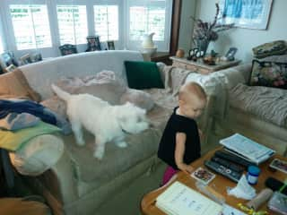 Chaos surrounding our granddaughter Maddy, and our Westie, Sophie!!