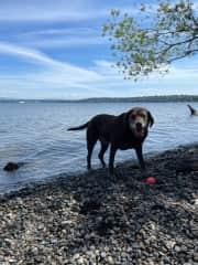 Nola loves swimming at Martha Washington Park