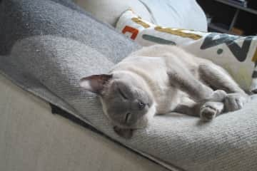 Scout the cat in Hampstead taking a nap