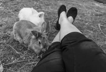 Housesitting. Me hanging out with the bunnies. My knees are dirty because I was just on my knees playing with the dog.