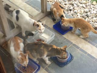 Glenda's cat family in Timor Leste. They were wild street cats who lived in my compound. I had them all sterilised and they became the official vermin catchers where I lived.