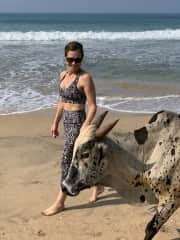 Fitting in with Sacred Cows in Goa, India this Nov 2019