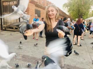 Masha feeding some pigeons in Chiang Mai, Thailand
