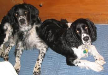 Dugan (L) and Jack (R)