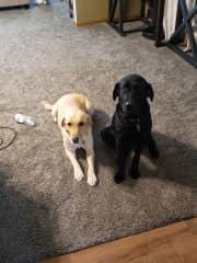 Daisy and sister Kota