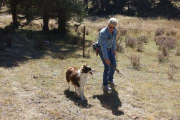 Fetch with Reba in a mountain meadow in Taos, NM.