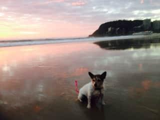 Lover of sunset beach walks