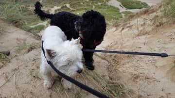 Poppy and Daisy
