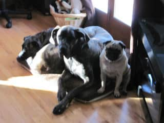 Kate (2005-2019), Avalon (2007-2014), and Paxton (2006-2013)