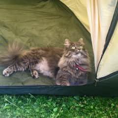 Nikita loves camping in the garden